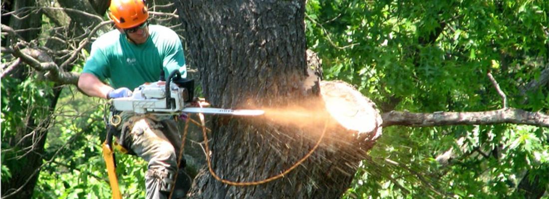 Potatura dell'albero con tecnica tree climbing