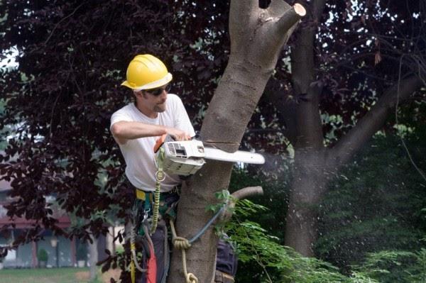 potatura degli alberi tree climbing