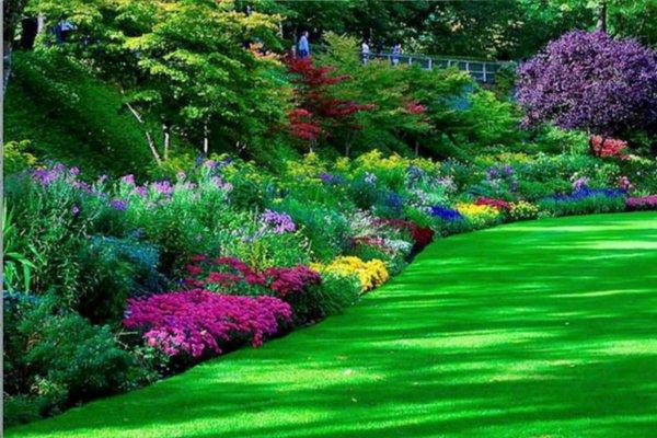 Come progettare il giardino alberi siepi e vialetti per la