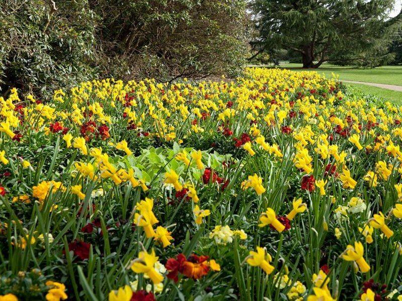 realizzazione parchi e giardini milano