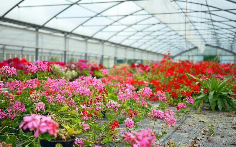 Notizie il tuo giardiniere a milano for Giardiniere milano