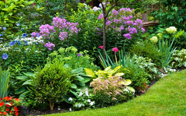 Consigli su come scegliere la pianta ornamentale migliore for Piante sempreverdi per giardino