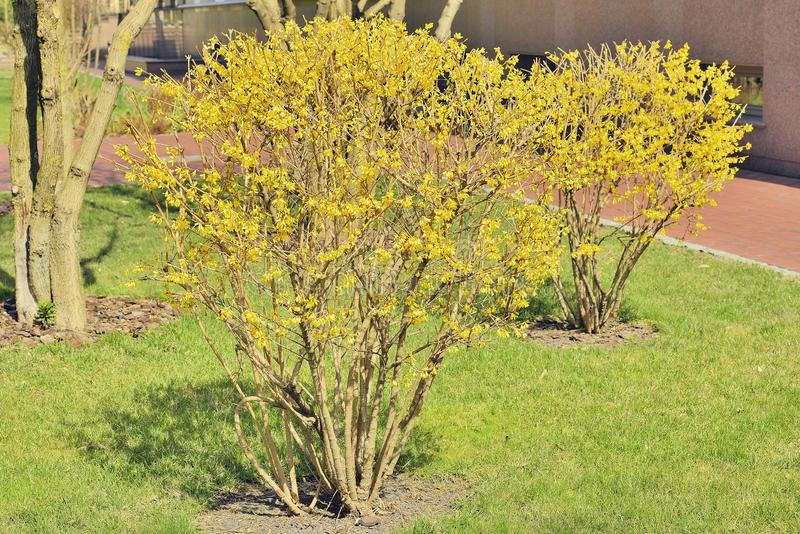 Arbusti Decorativi Da Giardino : Arbusti da giardino come sceglierli il tuo giardiniere a milano