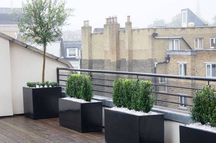 piante da terrazzo con clima freddo